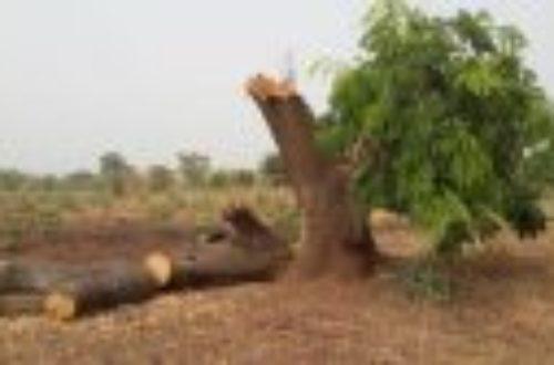 Article : La protection de l'environnement au Tchad est vouée à l'échec